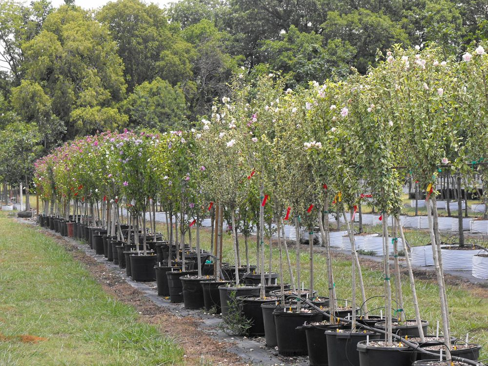 How Nurseries Help Defend Your Trees Against Foreign Pests