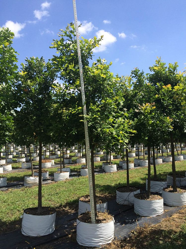 Why Trees Are Perfect For Commercial Landscaping