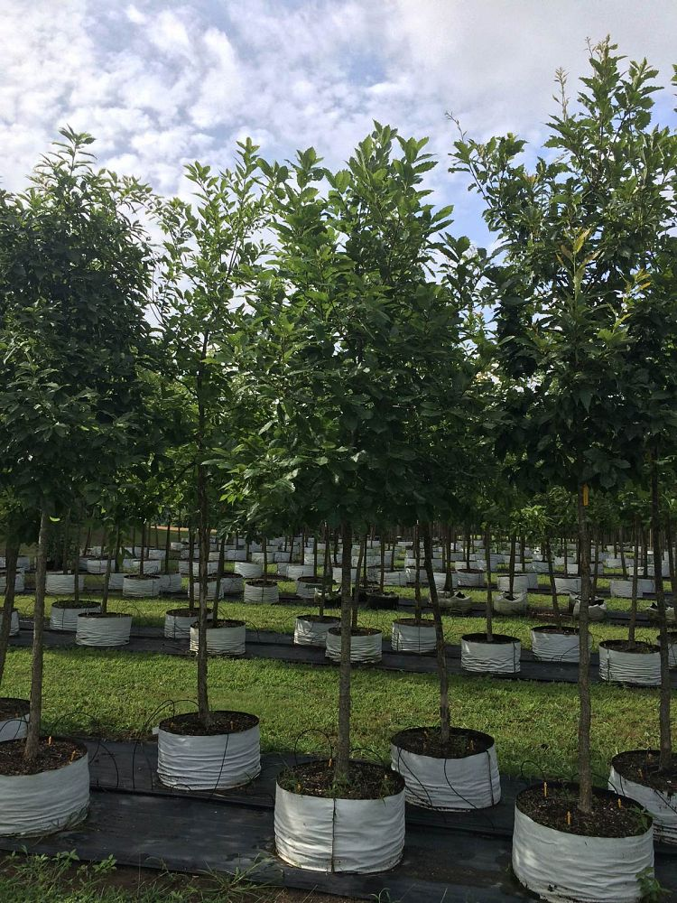 Signs You Need To Visit A Tree Nursery