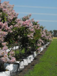 Improve Your Landscape With Locally Grown Ornamental Trees