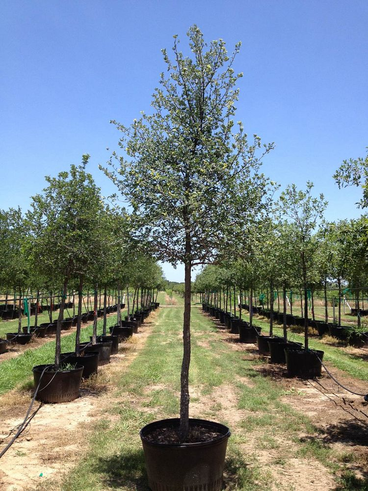 Is It OK to Plant Trees in the Summer?
