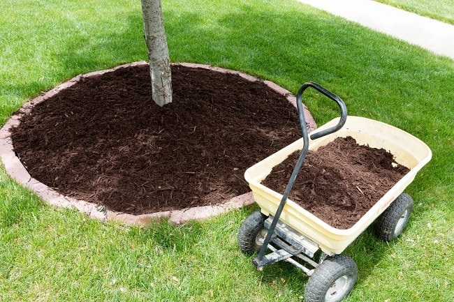 Why Mulch Is So Important For A Tree's Health