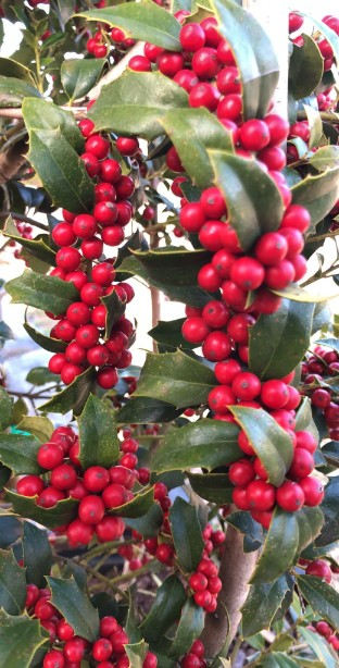 HOLLY – Christmas Jewel