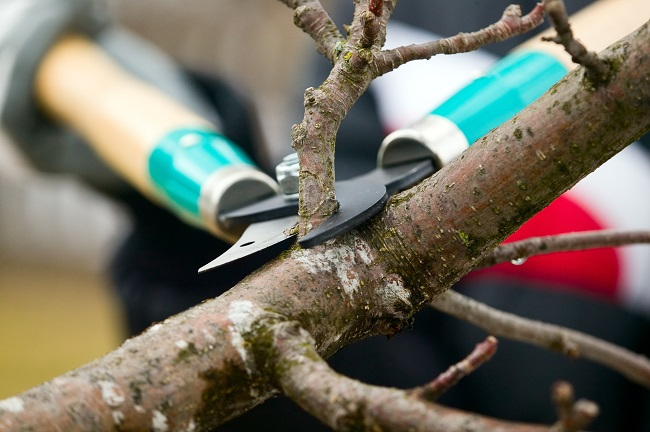 5 Benefits of Trimming Your Trees