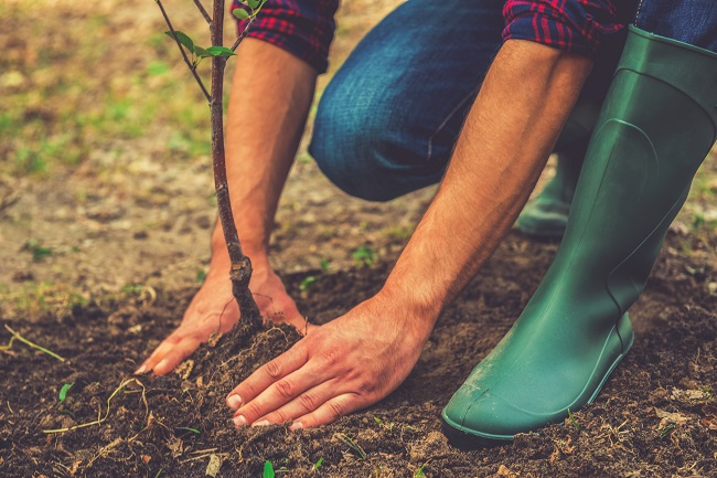 Where Should You Plant Your New Trees?