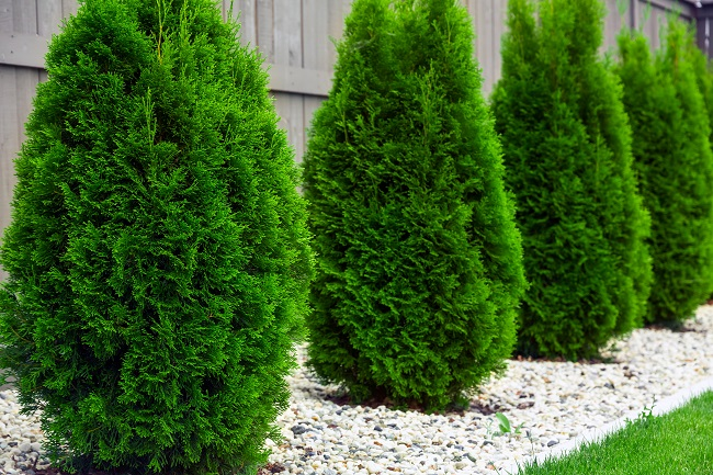 Protect Your Foundation with Native Evergreen Shrubs