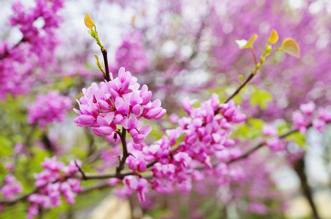 Ornamental Trees For Your Personality