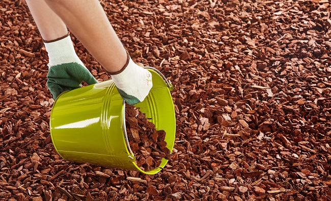 Use Mulch to Protect Against These Three Winter Problems