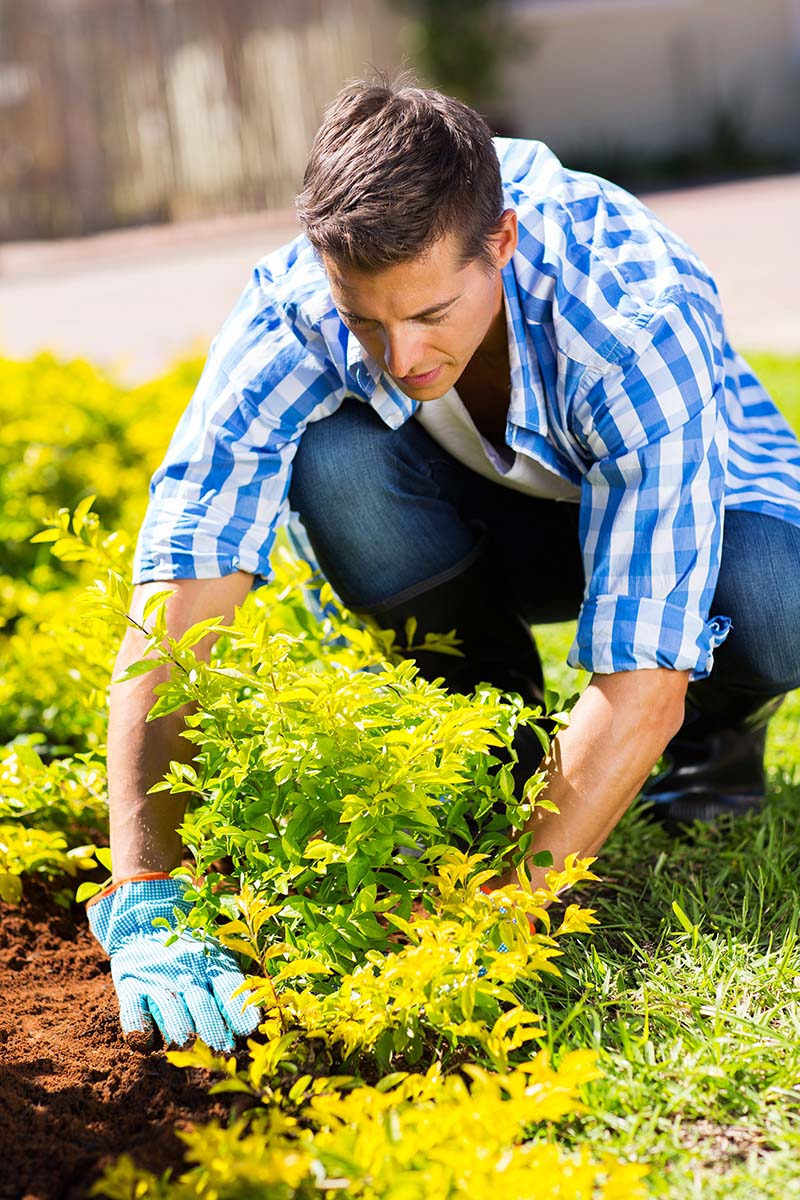 How to Help Your Shrubs Survive Transplanting