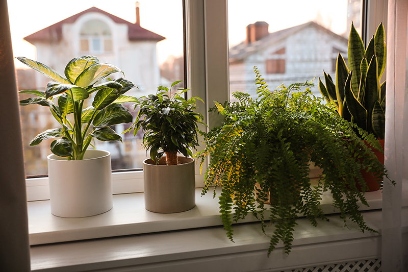 How Soon Can You Take Your Plants Back Outside After Winter?