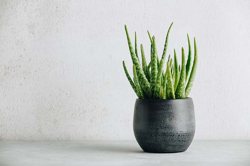 Five Indoor Plants To Purify Your Home And Health