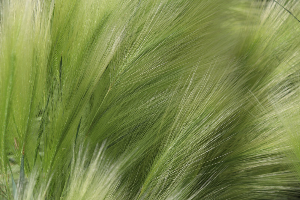 4 Reasons to Add Mexican Feather Grass to Your Commercial Landscaping This Year