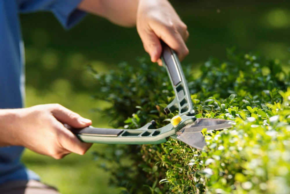 Privacy Trees or Hedges: Which One is Right For You?
