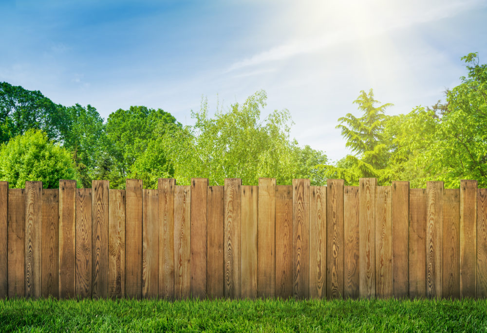 Everything you ever wanted to know about planting privacy trees