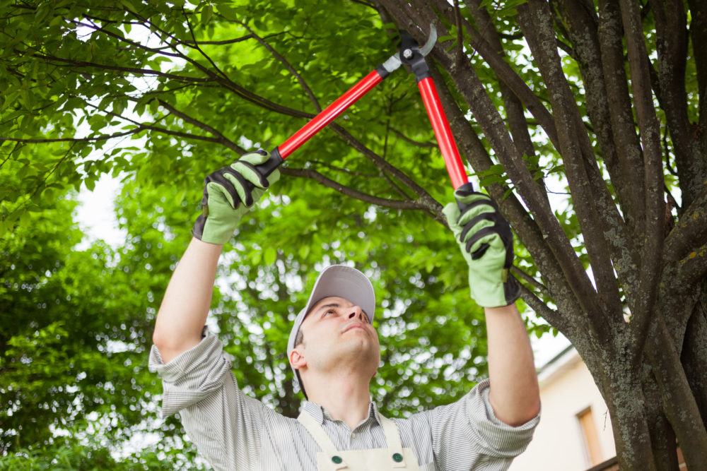 3 Ways to Stop Trees from Overgrowing on Your Property